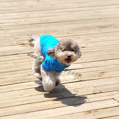 เสื้อโปโลสุนัข สีฟ้าสด (พร้อมส่ง)