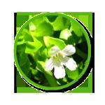 พืชพรมมิ