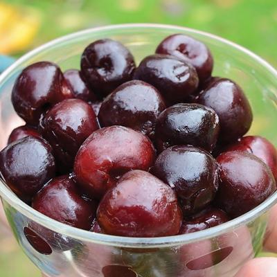 Cherry Jewel (เชอรี่อัญมณี)
