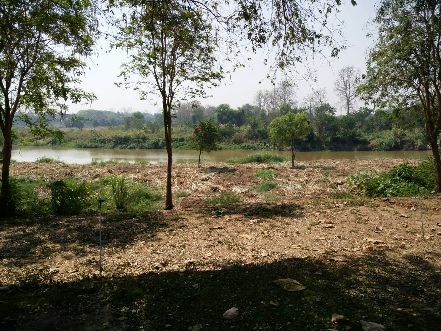 ที่ดินติดแม่น้ำปิง เชียงใหม่ เนื้อที่ 17 ไร่ ★ Land on the Ping River Chiang Mai area of 17 rai. ★